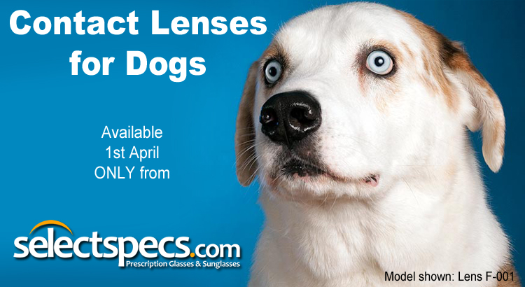 Contact Lenses For Dogs - From SelectSpecs.com