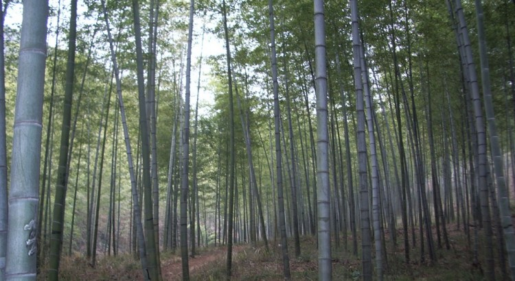 Why Wooden or Bamboo Glasses are Great for Green Living