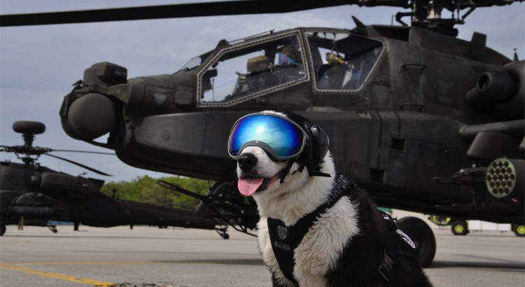 sunglasses_for_dogs