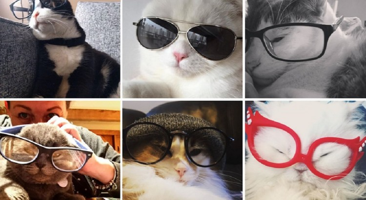 cute cats in glasses catsofinstagram