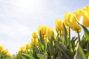 Spring 2017 Runway Trends