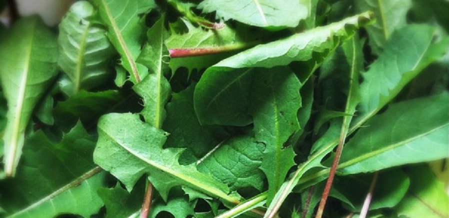 Top 10 Foods High in Lutein Dandelion Greens
